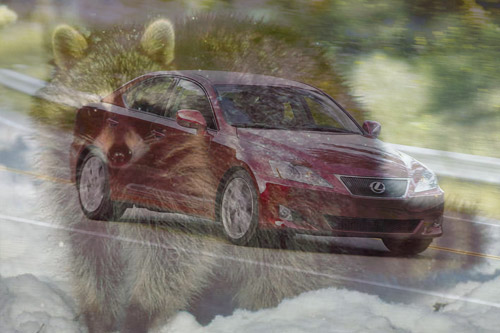 Raccoon Destroys Lexus IS 350