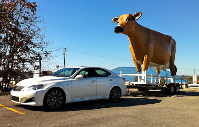 Lexus IS-F Towing a Plastic Cow